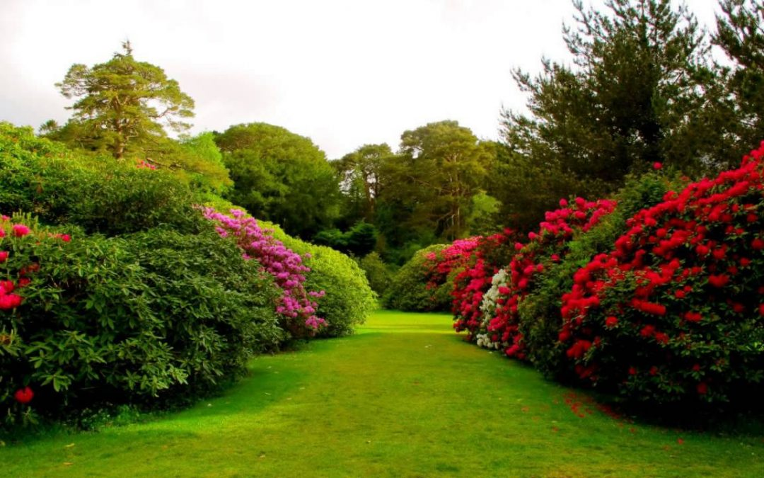 Belongings Tips for Creating Beautiful Garden Landscapes